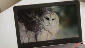 Asus TUF Gaming FX504 screen frame